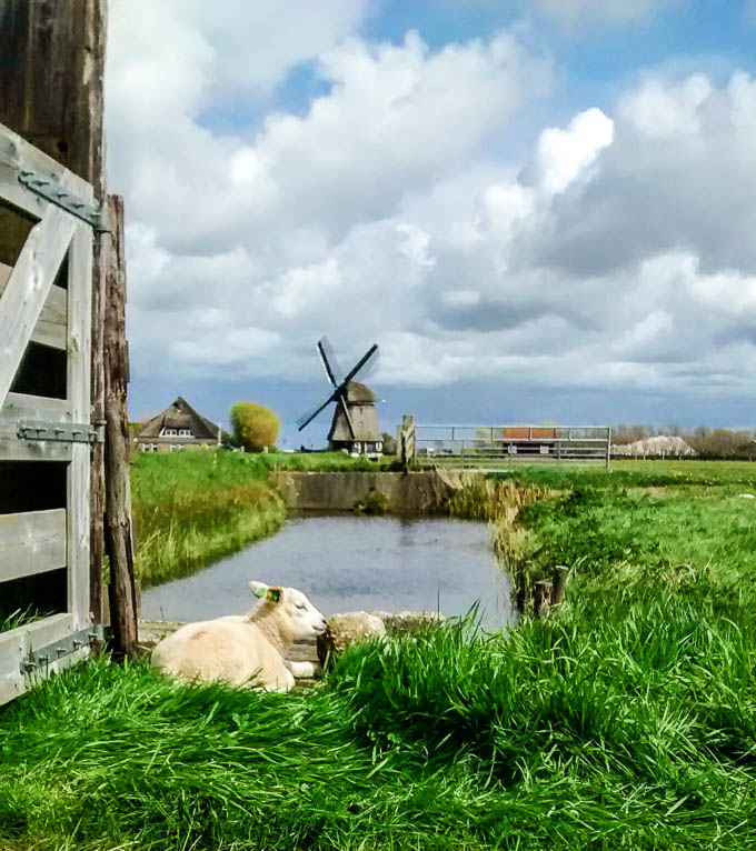 windmills Amsterdam