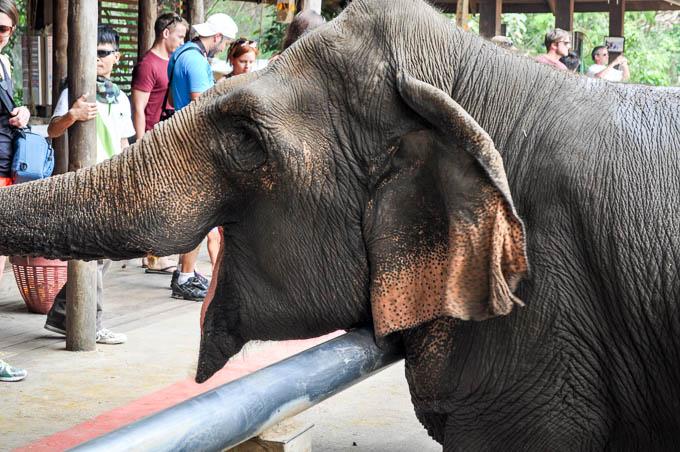 elephant-nature-park