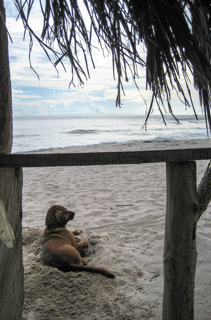 Beach Buddies Costa Rica