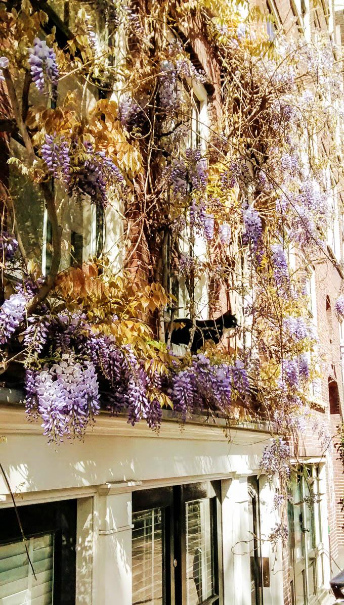Blooming Amsterdam