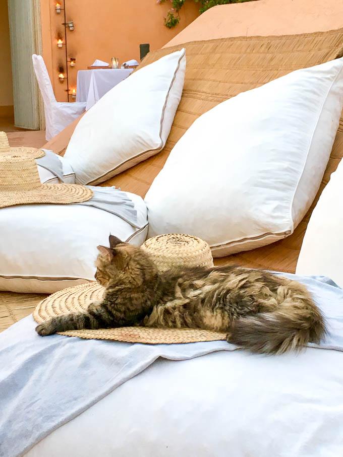 riad berbere cat